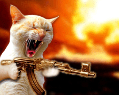 Cat machine gun.jpg