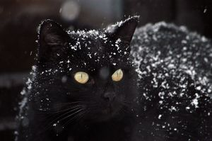 Pyewacket's exciting snow playtime